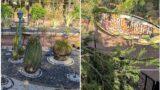 NTR Garden,hyderabad / Desert garden variety  of cacti