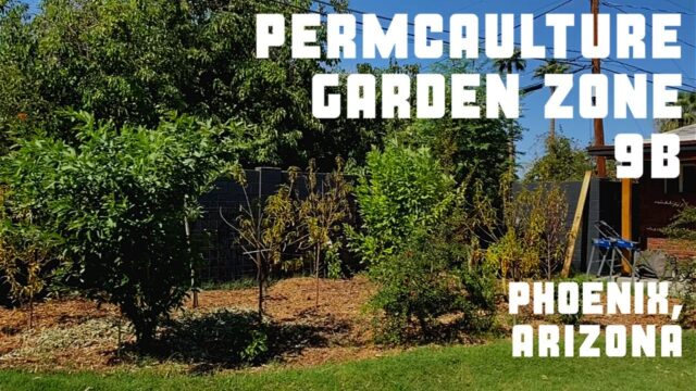 Permaculture Garden Zone 9b Phoenix, Arizona