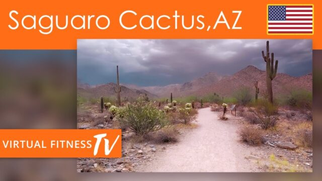 Virtual  Desert Nature Walk   Saguaro Cactus Landscape in Arizona USA with Desert Wind Sounds