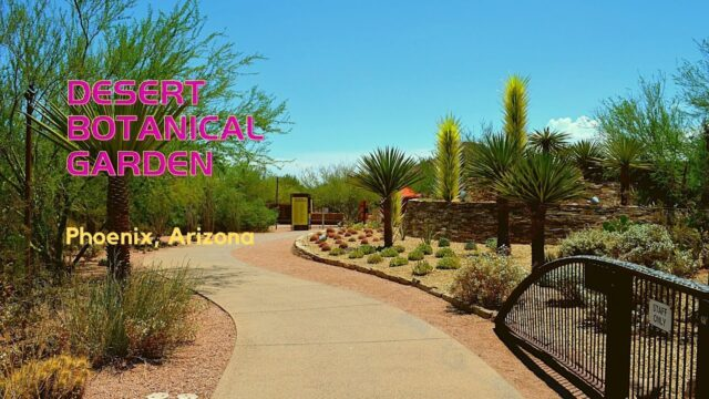 Desert Botanical Garden – Discover the Tranquil Vibrancy of Desert Plants