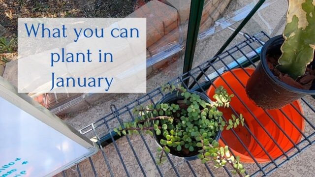 What you can plant in January Zone 9b Arizona