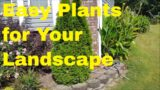Super Easy Plants to Grow for Your Landscape