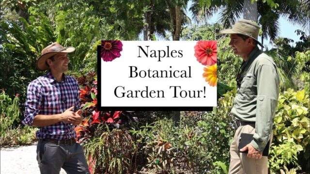 Naples Botanical Garden Episode 1 || Garden Walks with Jack