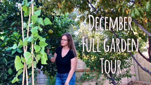 Full Edible Garden Tour in December – Phoenix, Arizona