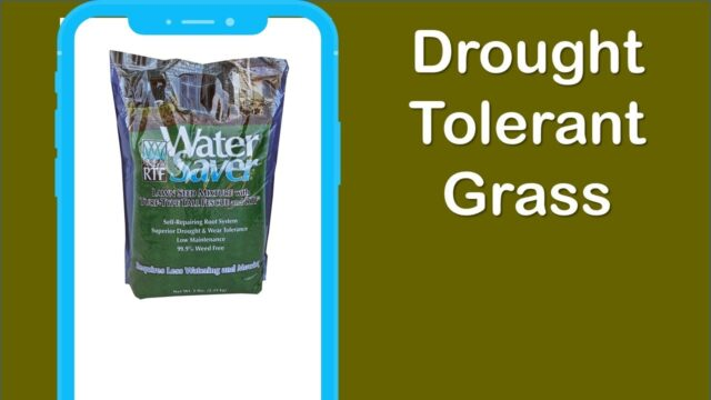 Best Drought Tolerant Grass You Should Have in 2020