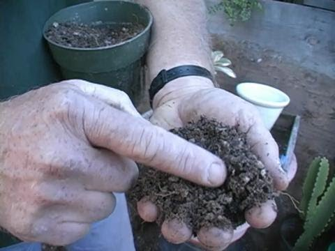 Potting Soil Recipe for Cacti and Succulents
