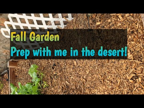 Fall vegetable garden in the desert!