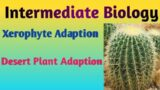 Desert plant Adaption | Biology second year Xerophytes