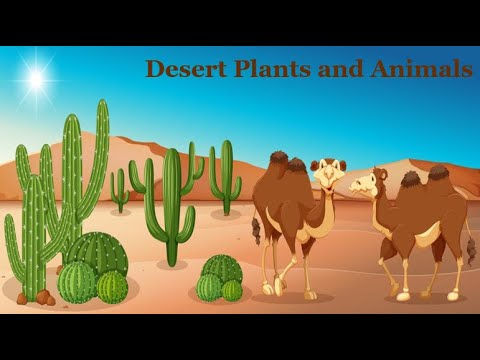 Desert Plants and Animals