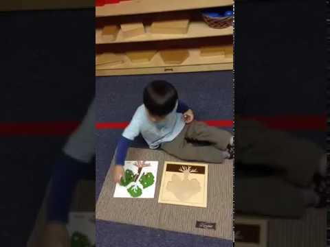 Botany at Apple Montessori Schools
