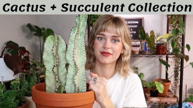 My Cactus + Succulent Collection | desert plants in the PNW 🌵