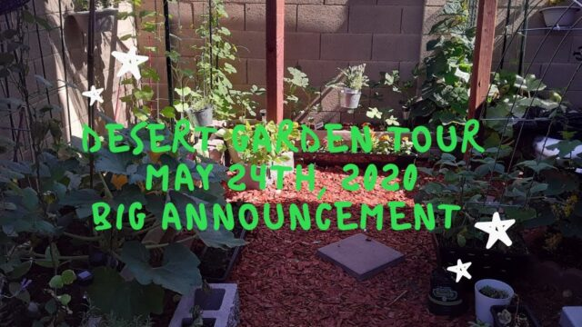 Small Space Desert Garden Tour in AZ  May 24th, 2020 – Plus Big Announcement!!!