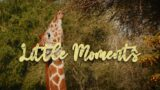 Little Moments ~ The Living Desert