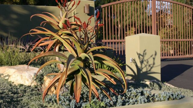 See How a Succulent Garden Looks When Mature