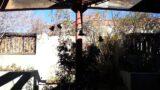 Utep garden