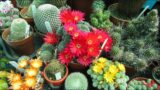 Top 10 BEST Flowering Cactus Plants