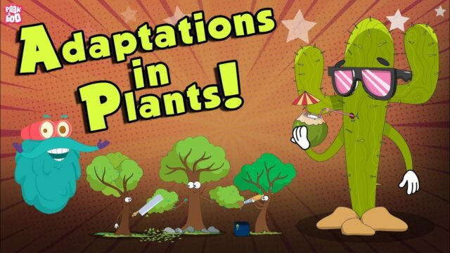 Adaptations In Plants | What Is ADAPTATION? | The Dr Binocs Show | Peekaboo Kidz