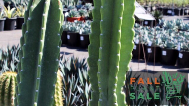 Fill up on fall plants at the Arizona Botanical Garden