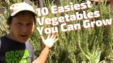 10 Easiest Vegetables You Can Grow in the Desert with Little Care