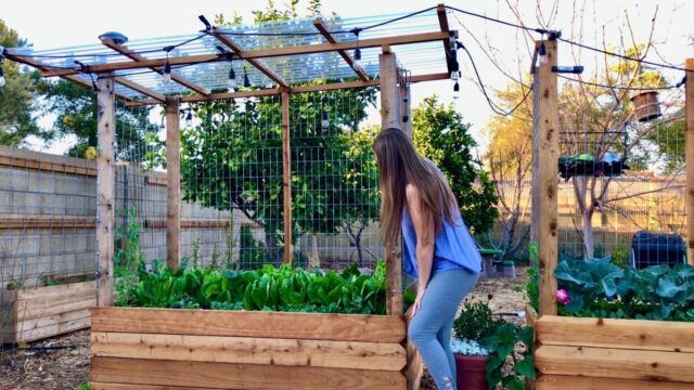 The ULTIMATE Garden Bed Design – Captures Rainwater, Pest Control, Storm Protection, Vertical Space