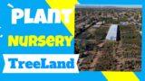Plant Nursery- Treeland Nursery- Gardening In Arizona