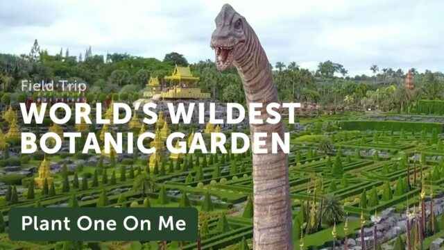 Nong Nooch: The World's Wildest Botanic Garden — Plant One On Me — Ep. 144