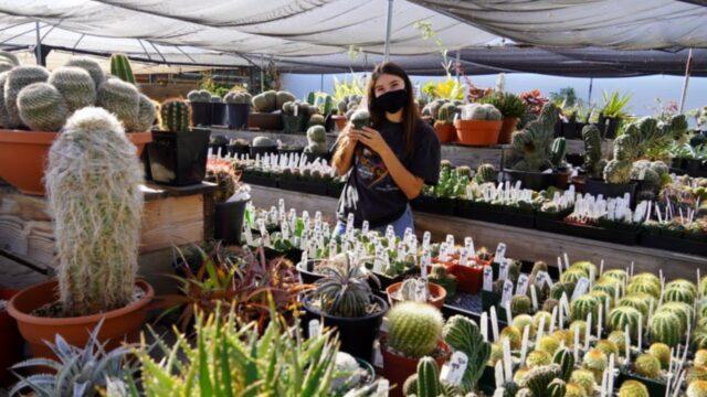 Rare Succulents & Cacti | Plant Shop Tour 2021