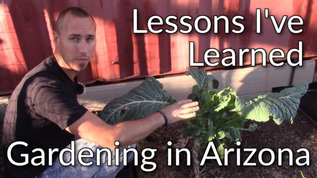 Lessons I've Learned in 2020 About Gardening in Arizona