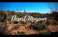 Arizona Sonora Desert Museum   Tucson, Arizona