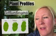 Schlumberger | How to Care for Seasonal Cacti | Simple
