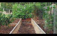 The secret of our successful desert garden {very little work}