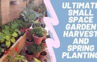 The ultimate small space garden harvest spring sowing-urban desert garden