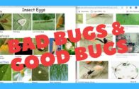 Bad bugs and good bugs in the 20th week of