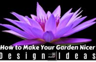 How to make your garden look more beautiful