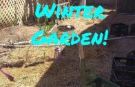 Start my winter desert garden! ! !