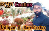 The most unique and rare cactus plants   Rare cacti