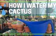 VLOG: How do I water my cactus plants | Cactus