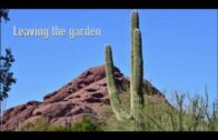 Arizona Desert Gardens
