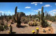 Cacti and succulents 🌵 cactus country 😊 desert plants landscape,