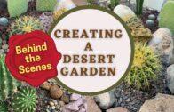 Creating a Desert Garden: Behind the Scenes (Part 2)  