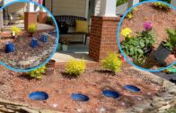How to create a beautiful low-maintenance flower bed | do