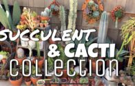 🌵 Outdoor plants   Cacti and succulents🌵