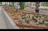 Succulents and Cactus Garden Panchkula, India's largest cactus garden with