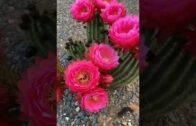 Cactus Country: Saturday Sunset Tour in Australian desert landscape