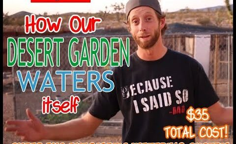 How to water our desert garden? PVC Watering System  