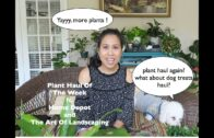 May 2019 Plant Shopping // Home Depot // The Art