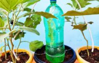 Plant DIY automatic watering system | Egg plant automatic watering