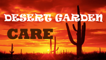 How to give the scenery in the yard | Desert Garden Care