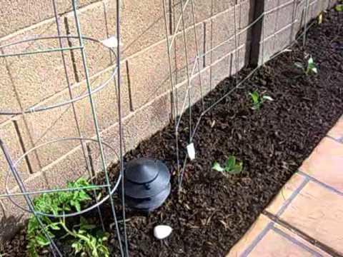 Soil Desert Garden Care