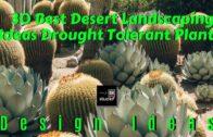 30 best desert landscaping ideas-drought-tolerant plants